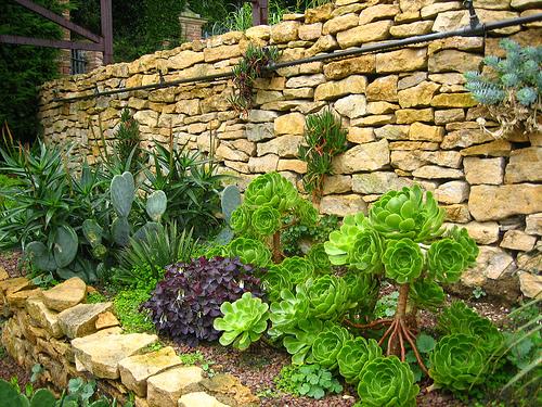 Sukulenty i kamienny murek przywodzą na myśl słoneczne toskańskie ogrody i patia.